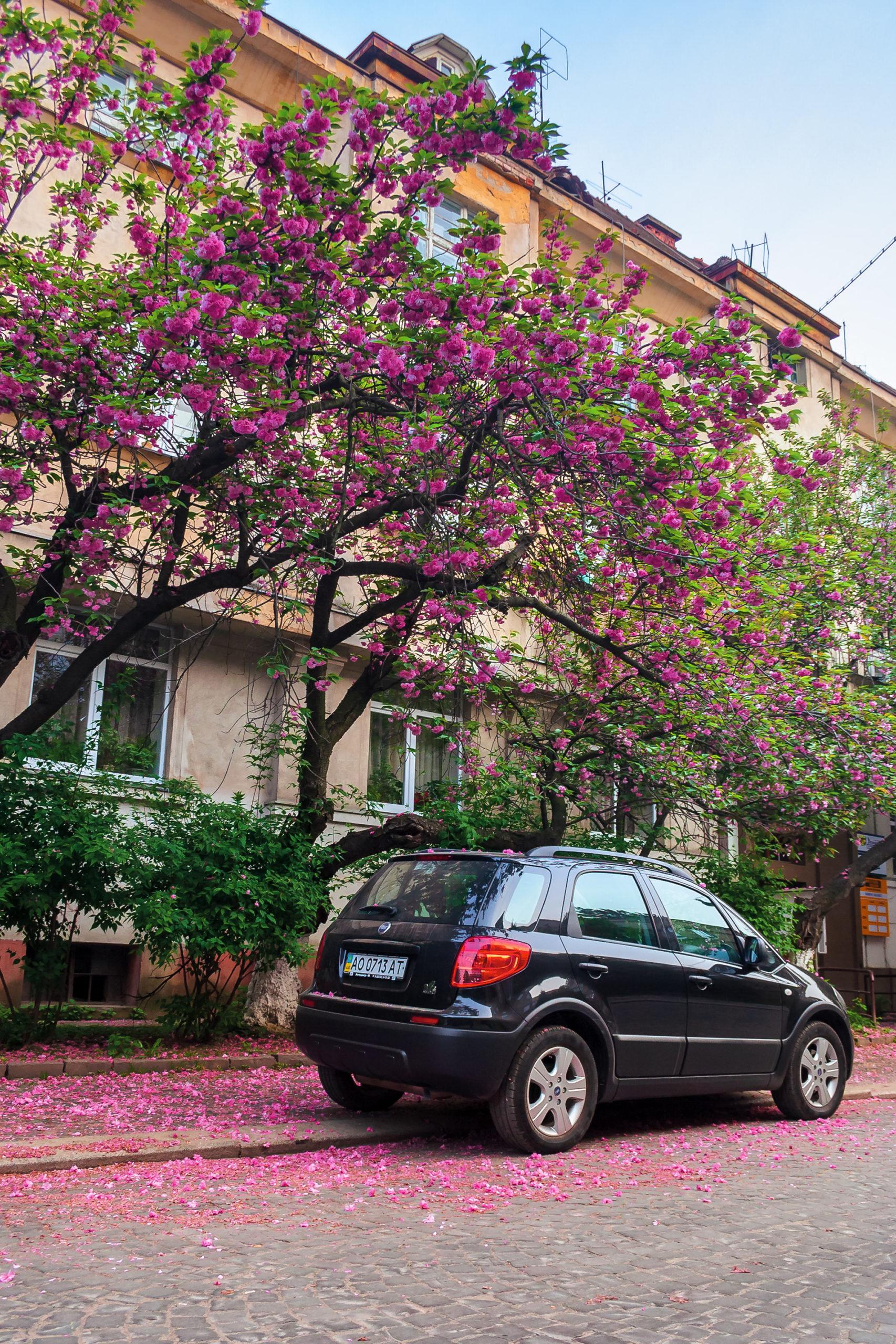 Comment protéger une voiture qui dort sous les arbres ?
